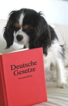 Tierrecht Anwalt Tieranwalt Bundesweite Rechtsberatung