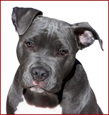 Gefährliche Hunde Listenhunde Sog Kampfhunde Regelungen Zur