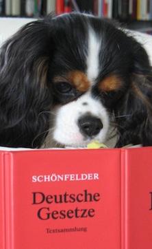 Hundezucht Urteile Hund Zucht Anwalt Hundezucht Bundesweite
