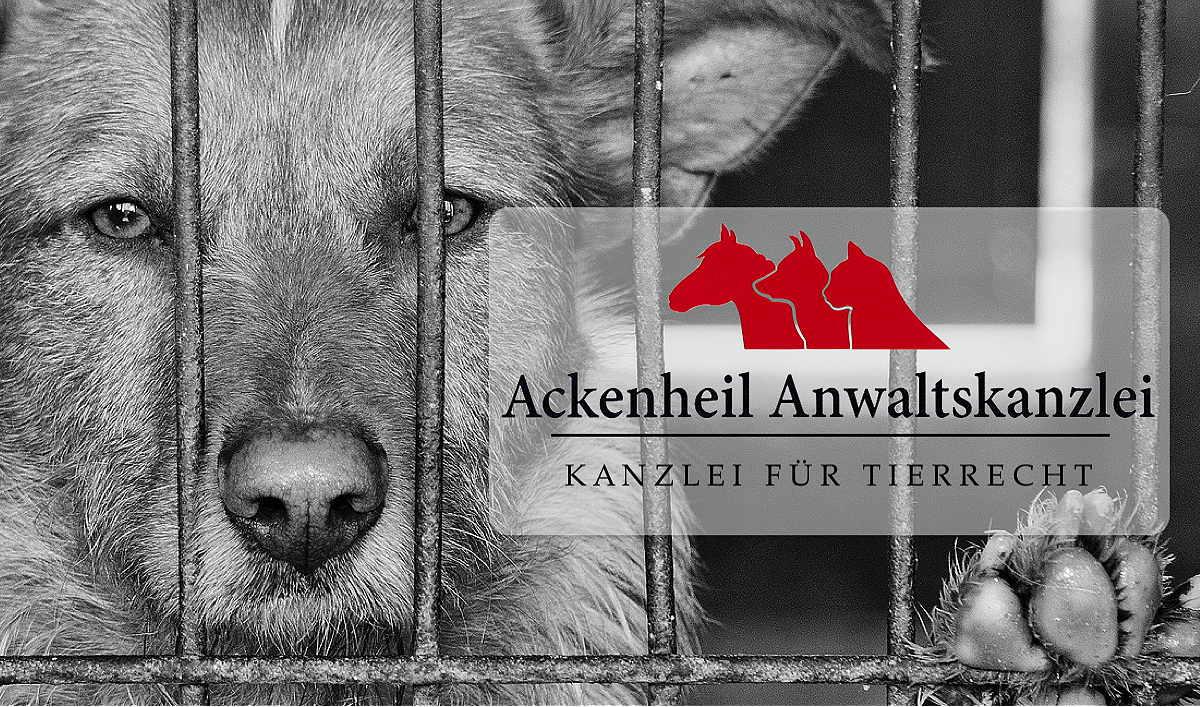 Grundung Tierschutzverein Eintragung Genehmigungen Verein